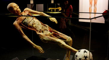 Human Bodies. The Exhibition